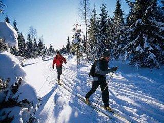 Битцевская лыжная трасса будет закрыта?